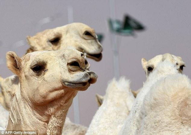 Camels using botox