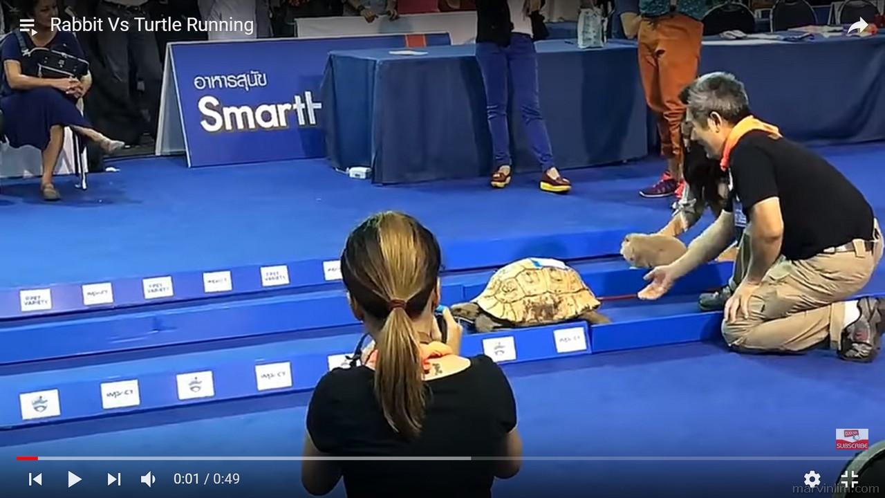 Rabbit vs Turtle Resized1