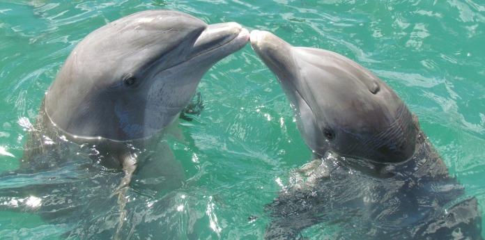dolphin-1974975_1280
